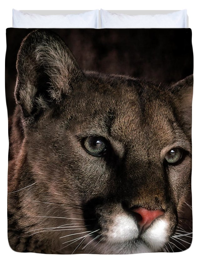 Mountain Lions Duvet Cover featuring the photograph Locked Onto Prey by Elaine Malott