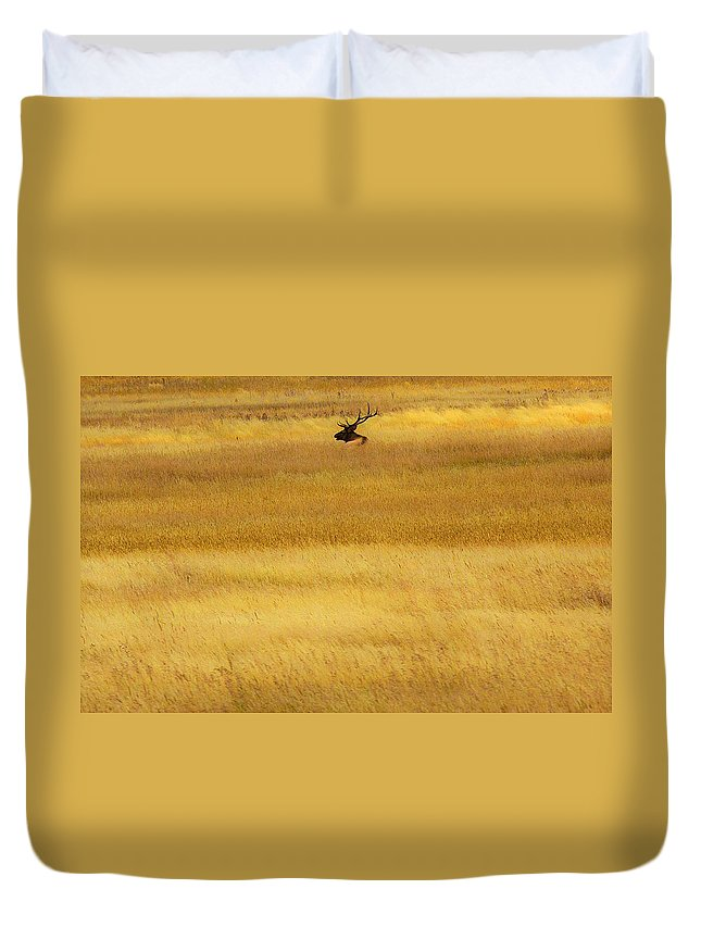 Elk Duvet Cover featuring the photograph Lone Elk In Field by Lowell Monke