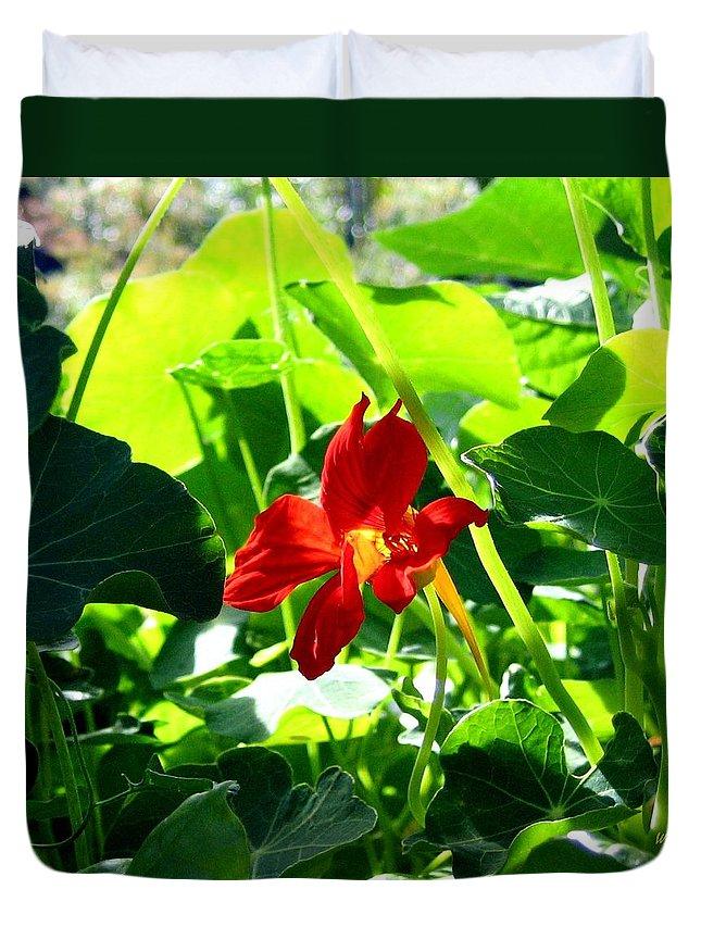 Nasturtium Duvet Cover featuring the photograph Lone Nasturtium  by Will Borden