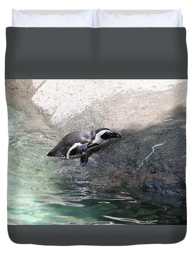 Penquin Duvet Cover featuring the photograph lonely Penquin by Minnie Davis