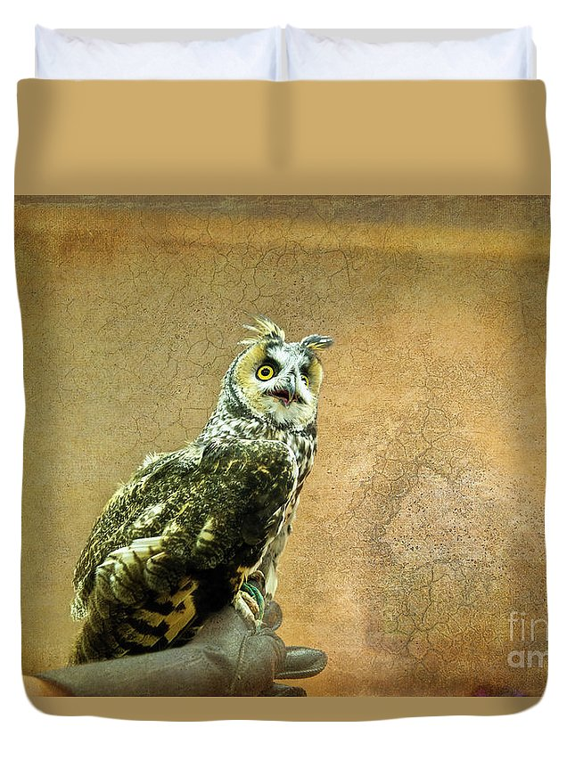 Owl Duvet Cover featuring the photograph Long Eared Owl by David Arment