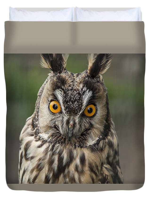 Long-eared Owl Duvet Cover featuring the photograph Long-eared Owl by Martina Fagan