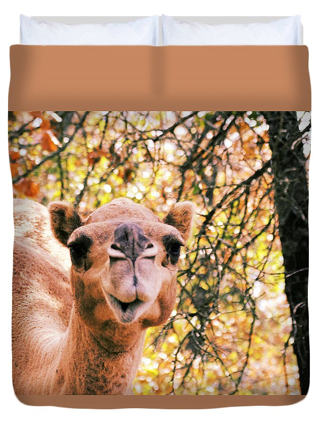 Camel Duvet Cover featuring the photograph Look At Me by Douglas Barnard