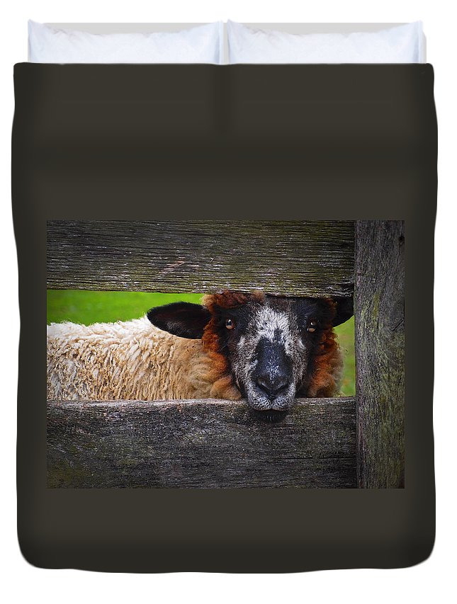 Lookin At Ewe Duvet Cover featuring the photograph Lookin At Ewe by Skip Hunt