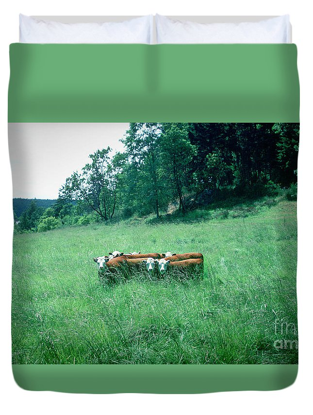 Cows Duvet Cover featuring the photograph Looking Back by Peter Simmons