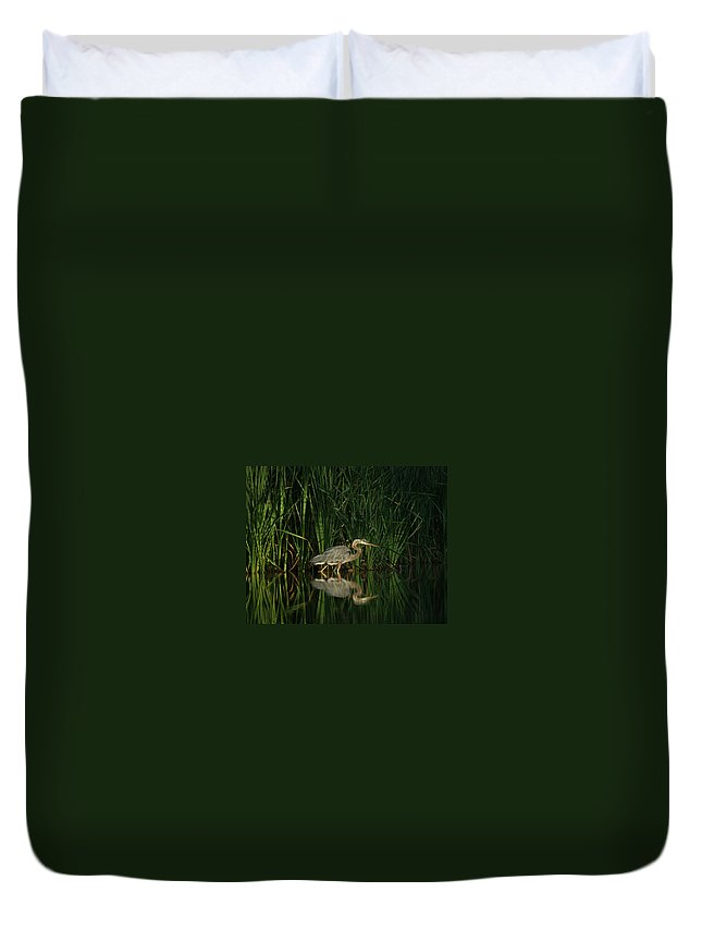 Animals Duvet Cover featuring the photograph Looking For Breakfast by Ernie Echols