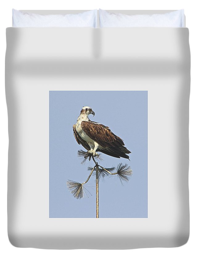 Bird Duvet Cover featuring the photograph Looking For Dinner by Jill Myers
