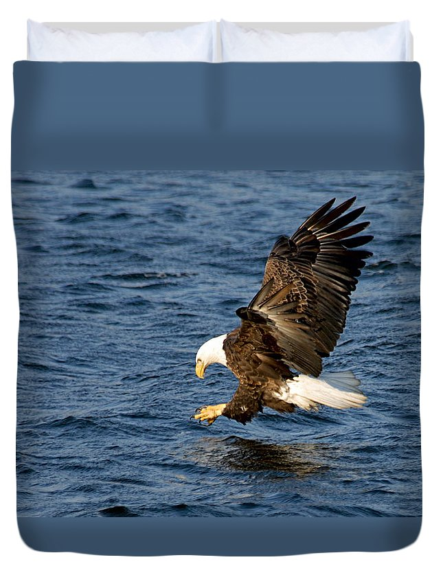 American Bald Eagle Duvet Cover featuring the photograph Looking For Fish by Larry Ricker