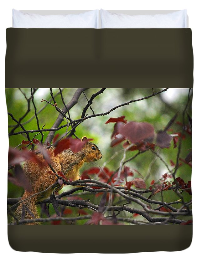 Squirrels Duvet Cover featuring the photograph Looking For Love by Donna Shahan