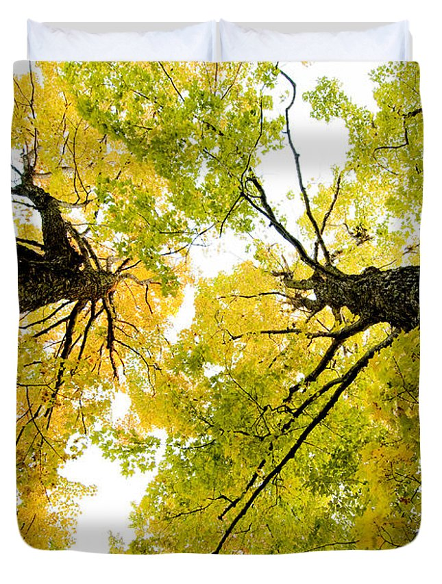 Fall Duvet Cover featuring the photograph Looking Up At Fall by Greg Fortier