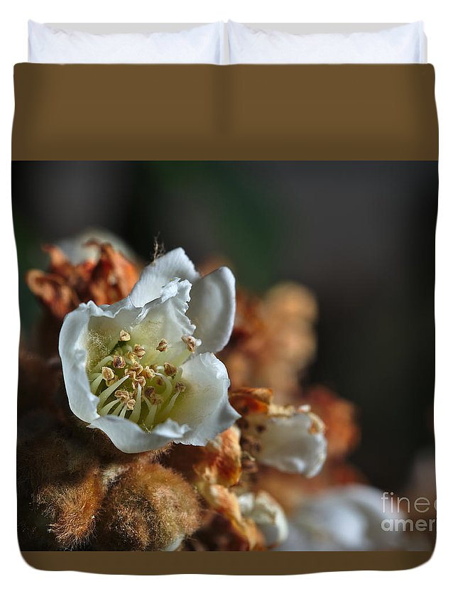 Loquat Duvet Cover featuring the photograph Loquat Flower by Angelo DeVal