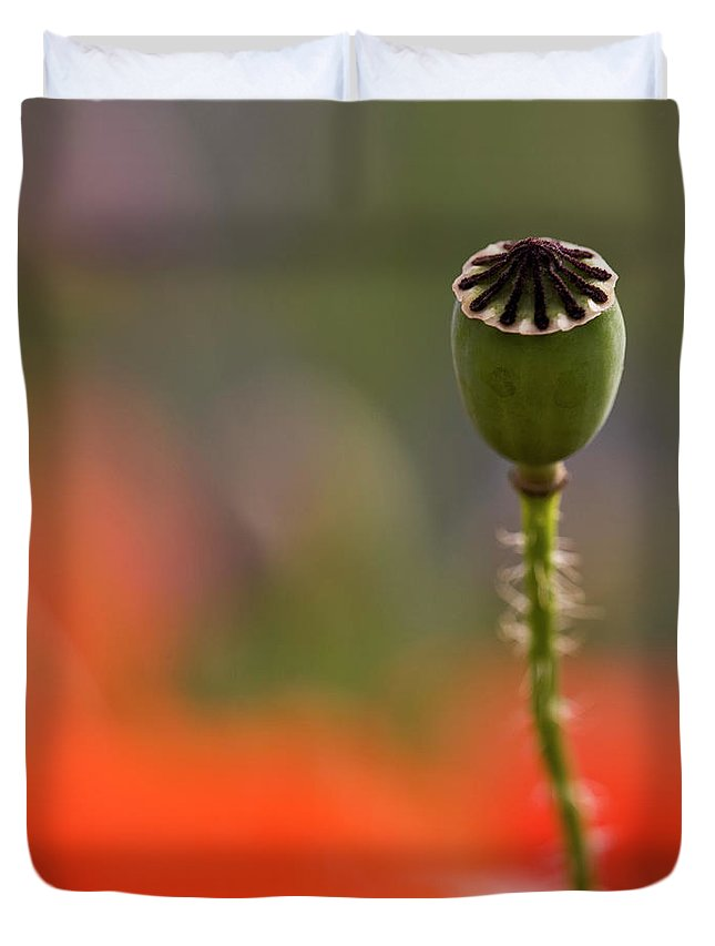 Poppy Duvet Cover featuring the photograph Lost In The Field by Heiko Koehrer-Wagner