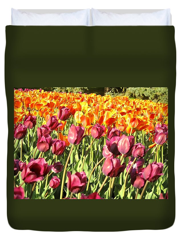 Tulips Duvet Cover featuring the photograph Lots Of Tulips by Ian MacDonald