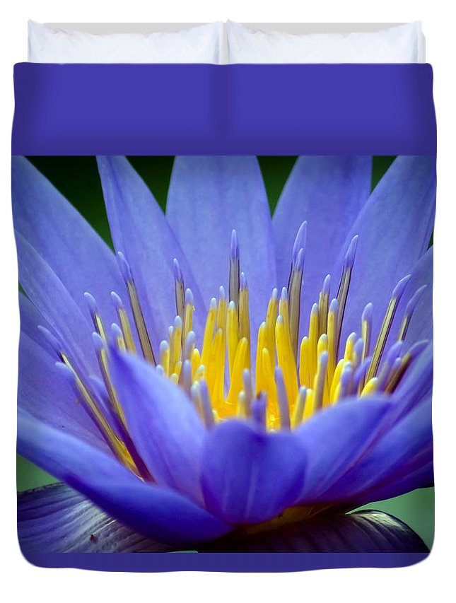 Aquatic Duvet Cover featuring the photograph Lotus 6 by Jijo George