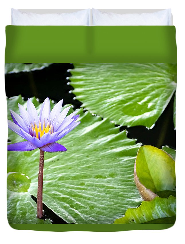 Aquatic Duvet Cover featuring the photograph Lotus 7 by Jijo George