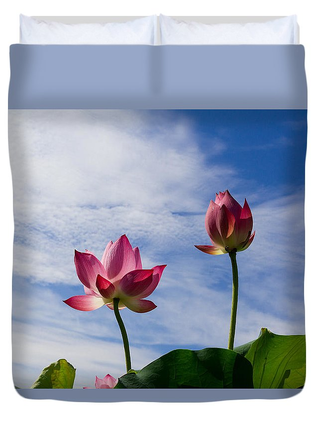 Lotus Duvet Cover featuring the photograph Lotus Flower And Lotus Flower Plants by Hang Tran Thi Thu