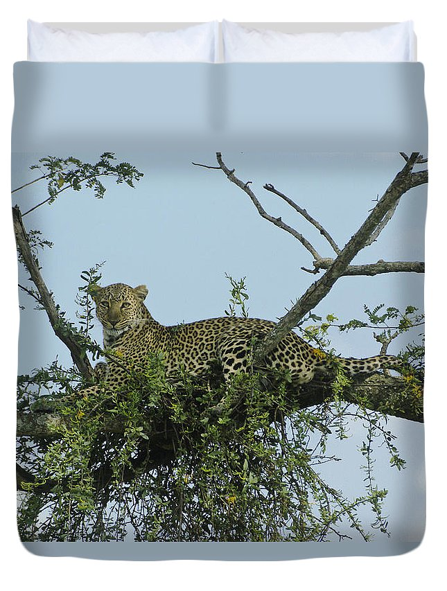 Africa Duvet Cover featuring the photograph Lounging Leopard by Michele Burgess