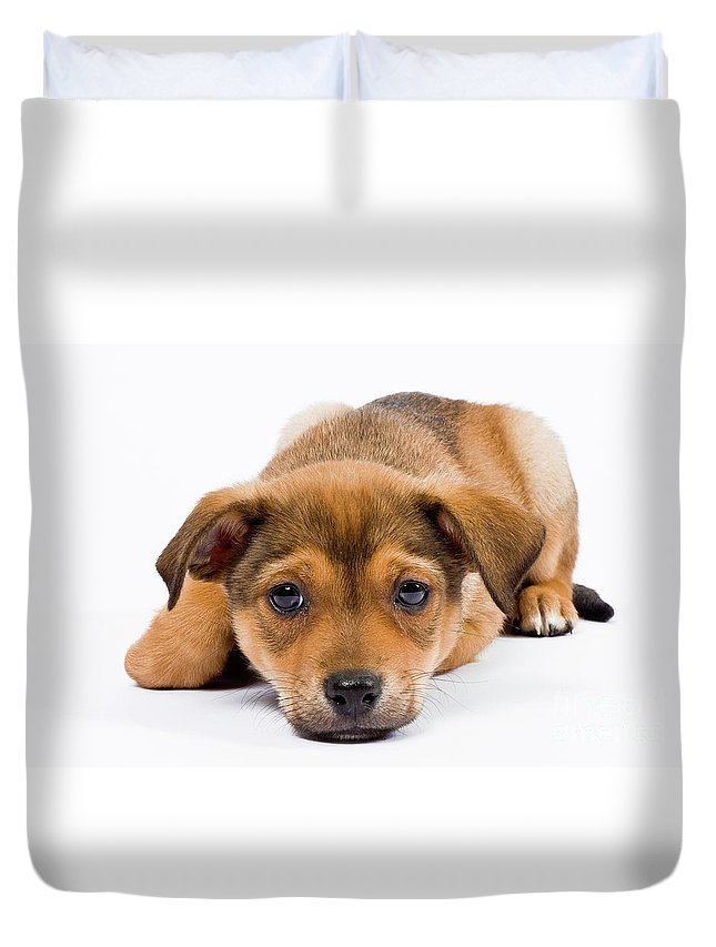 Puppy Duvet Cover featuring the photograph Love Me Puppy by Dean Birinyi
