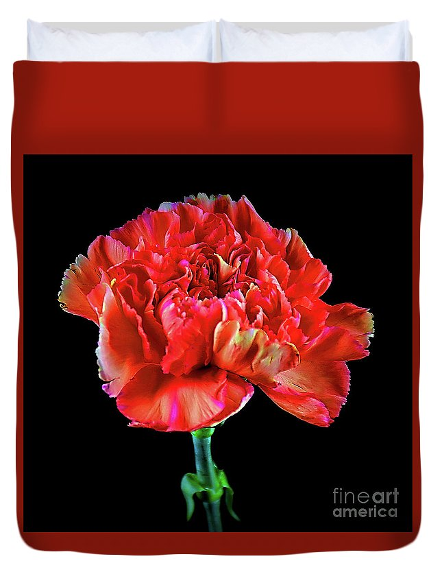 Lovely Carnation 12718-1 Duvet Cover featuring the photograph Lovely Carnation 12718-1 by Ray Shrewsberry