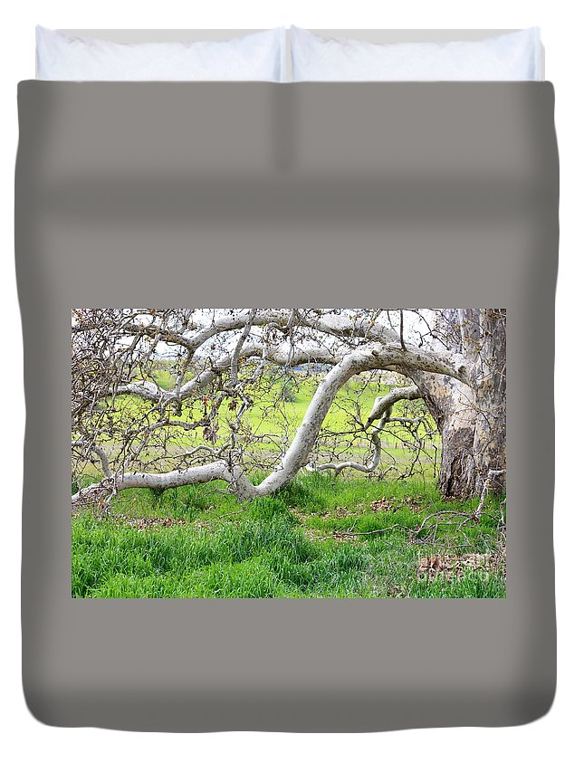 Landscape Duvet Cover featuring the photograph Low Branches On Sycamore Tree by Carol Groenen