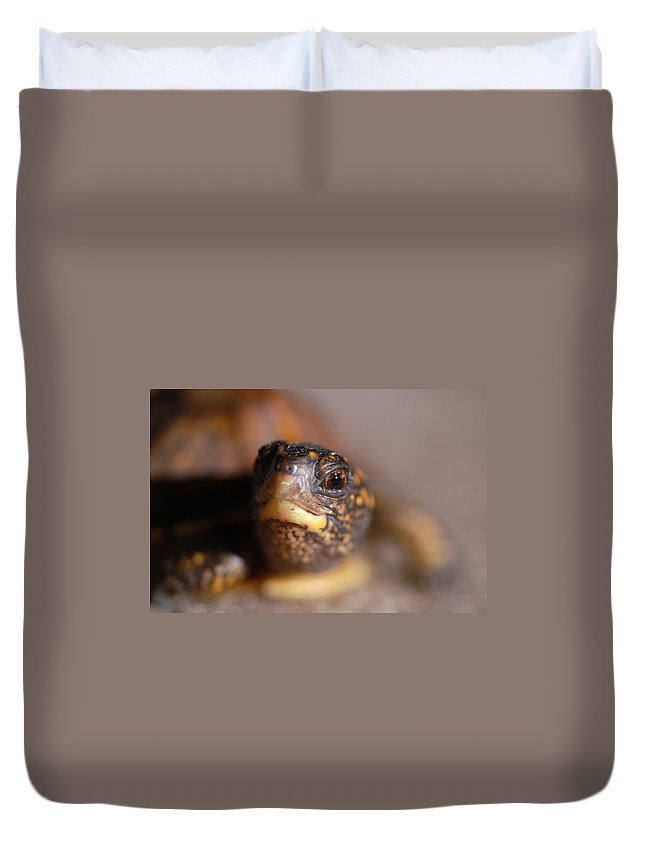Clay Duvet Cover featuring the photograph Lucky by Clayton Bruster