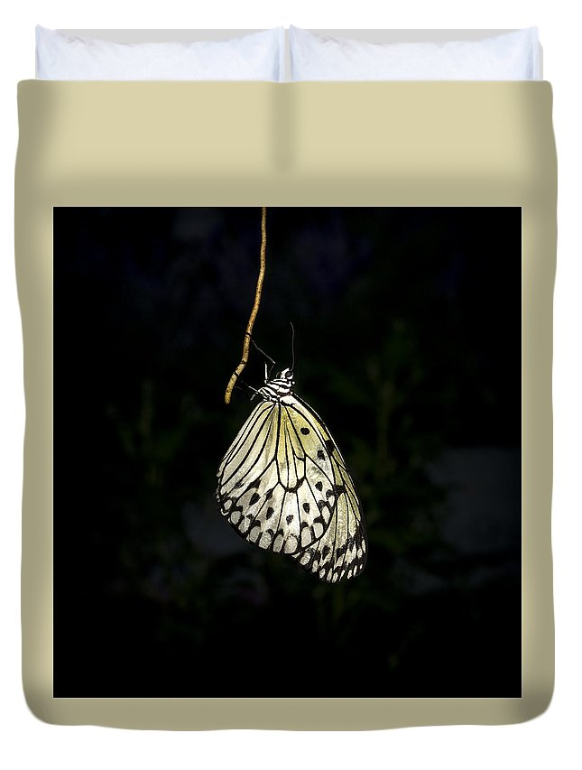 Butterfly Duvet Cover featuring the photograph Luminous Paper Kite At Rest by Sharon Haeger