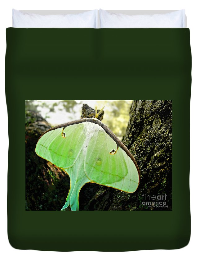 Macro Duvet Cover featuring the photograph Luna Moth No. 3 by Todd Blanchard
