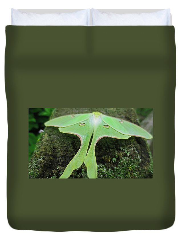 Moth Duvet Cover featuring the photograph Luna Moth by Jessica Killingbeck