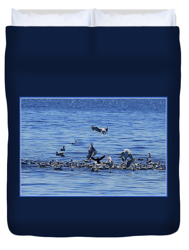 Seagulls Duvet Cover featuring the photograph Lunch Is Served by BYETPhotography