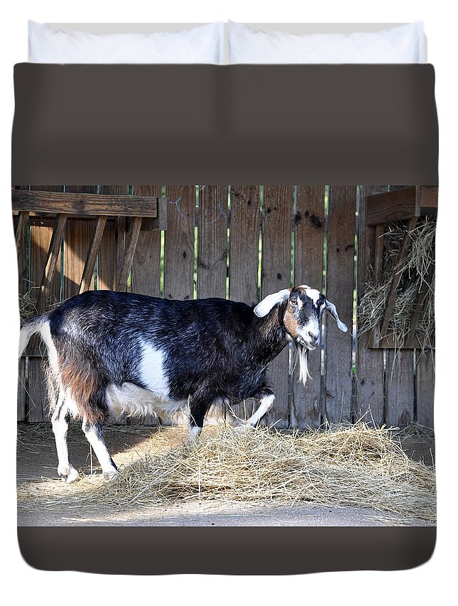 Animals Duvet Cover featuring the photograph Lunchtime by Jan Amiss Photography