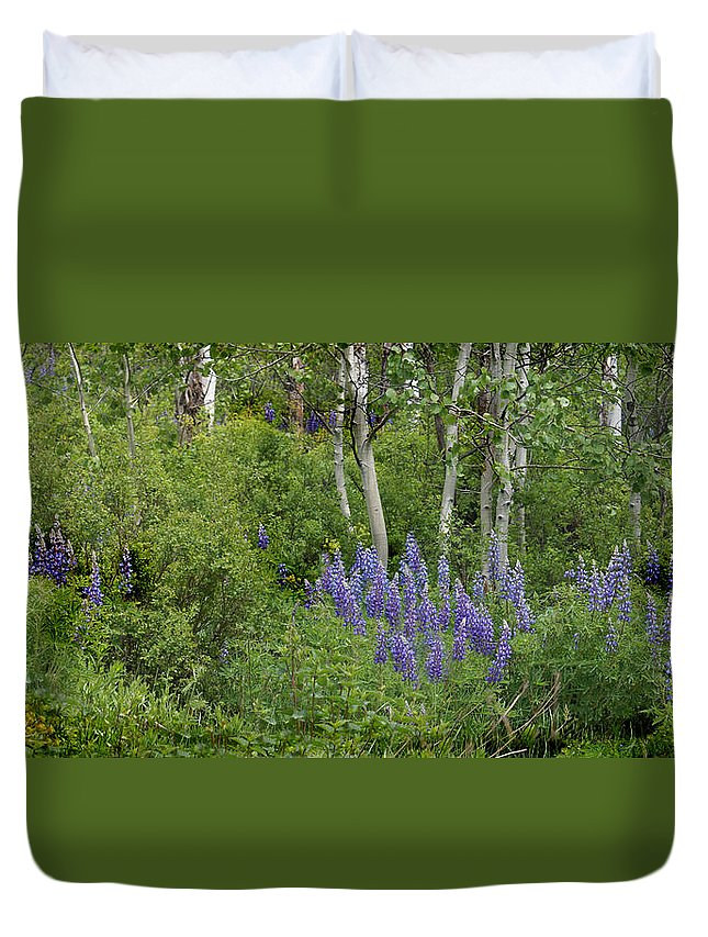 Aspen Duvet Cover featuring the photograph Lupine And Aspens by Heather Coen