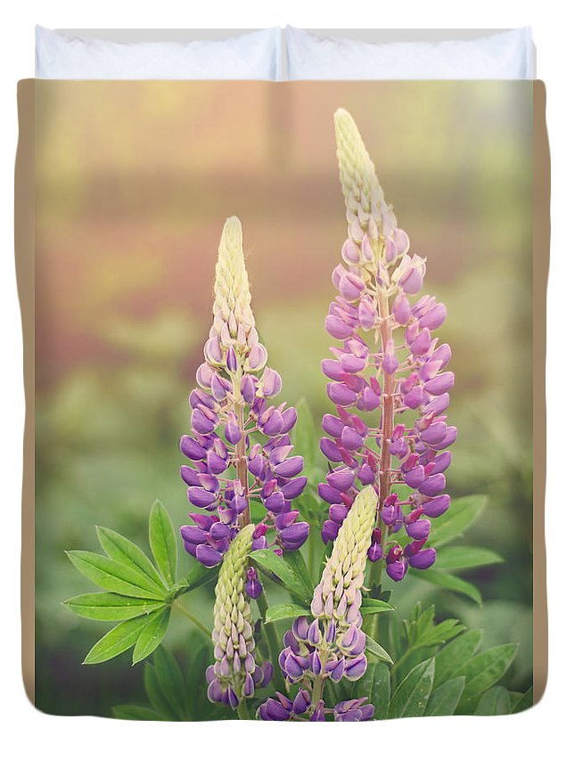 Lupine Duvet Cover featuring the photograph Lupine Sunrise by Jayne Gulbrand