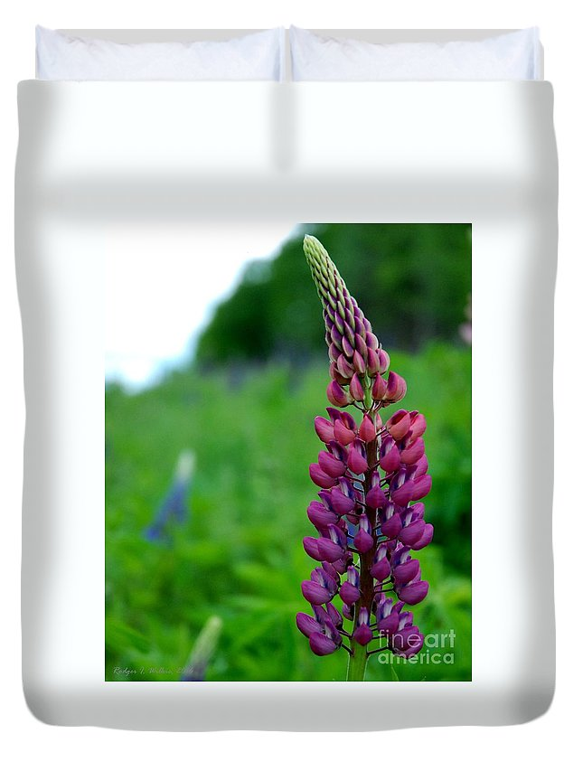 Canada Duvet Cover featuring the photograph Lupins 2016 5 by Rodger Wilkie