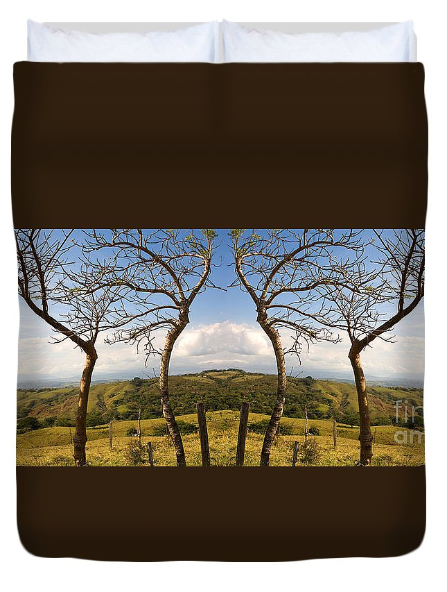 Trees Duvet Cover featuring the photograph Lush Land Leafless Trees IIi by Madeline Ellis