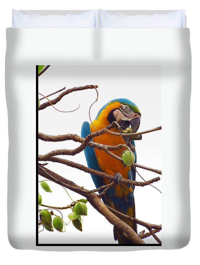 Macaw Duvet Cover featuring the photograph Macaw by James Hennis