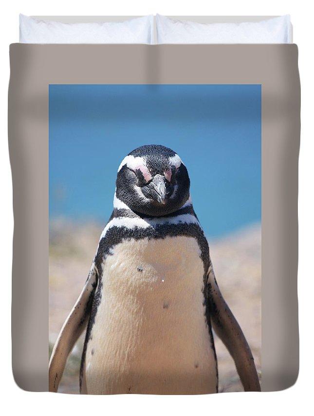 Penguin Duvet Cover featuring the photograph Magellanic Penguin In Argentina by Julian Regan