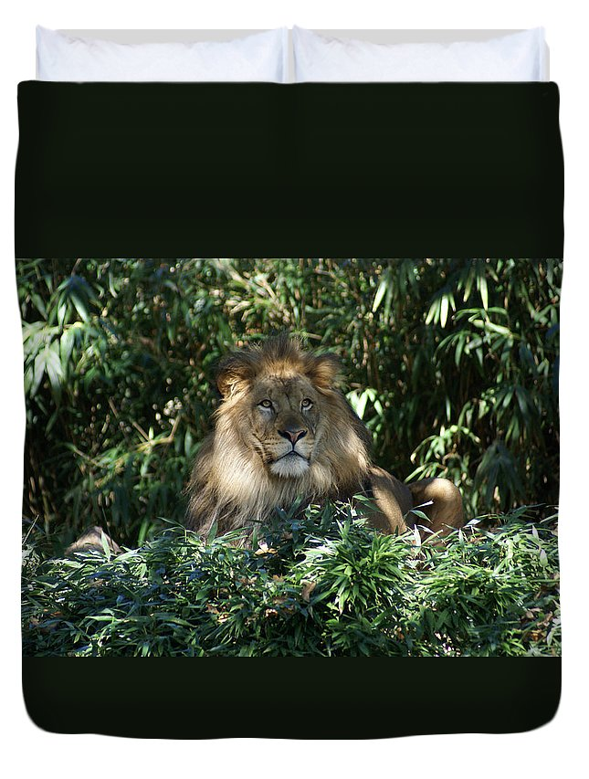 Lion Duvet Cover featuring the photograph Magestic Lion by Heidi Poulin