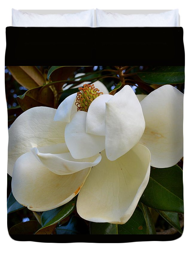 Magnolia Duvet Cover featuring the photograph Magnolia Bloom by Linda Covino
