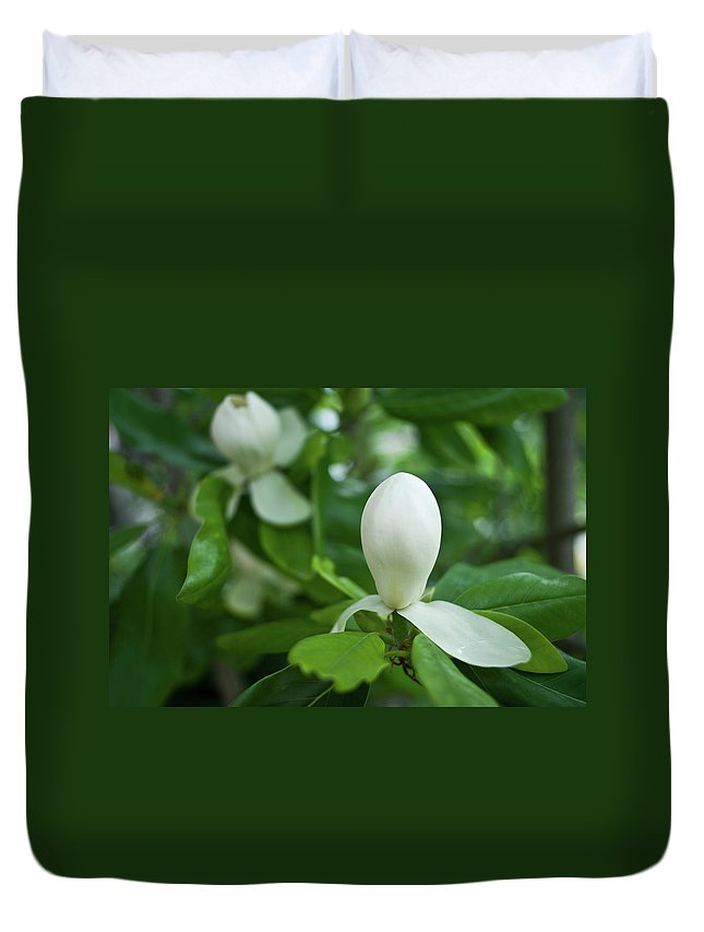 Magnolia Duvet Cover featuring the photograph Magnolia Bud by Douglas Barnett