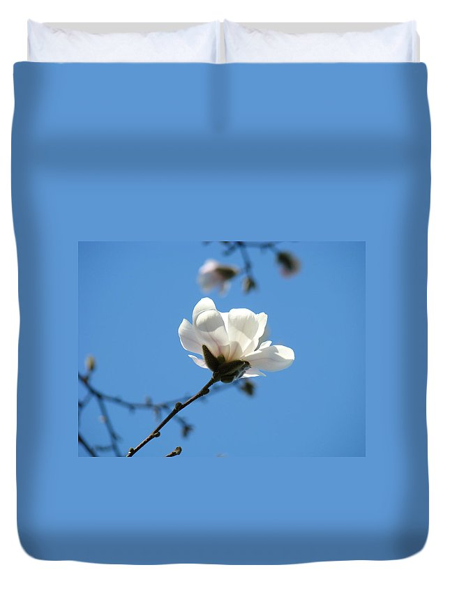Magnolia Duvet Cover featuring the photograph Magnolia Flower Tree Art Prints Blue Sky Floral Baslee Troutman by Baslee Troutman