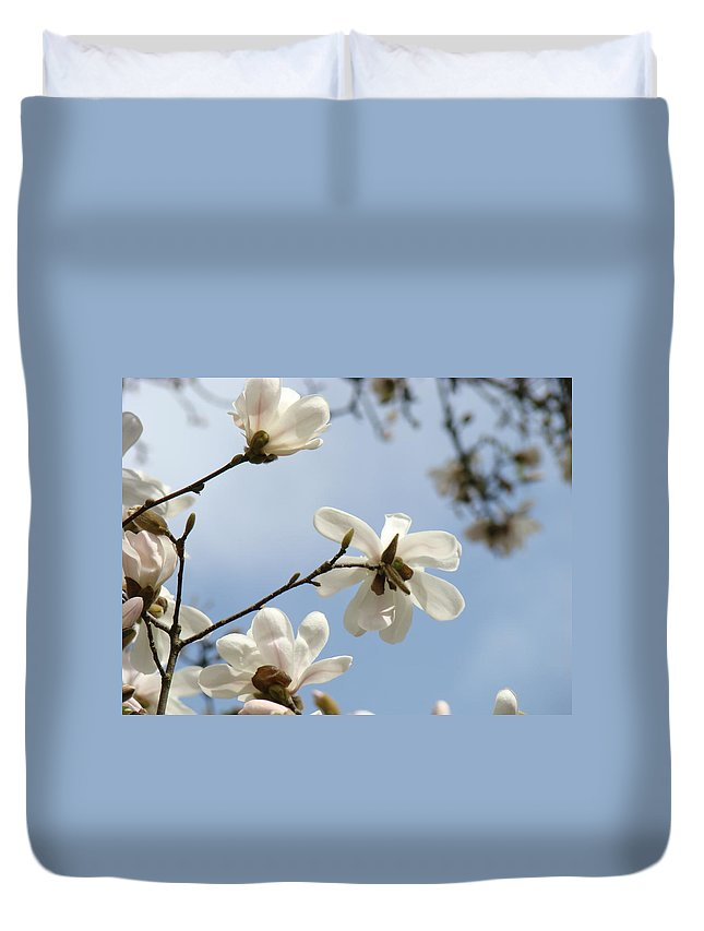 Magnolia Duvet Cover featuring the photograph Magnolia Flowers White Magnolia Tree Spring Flowers Artwork Blue Sky by Baslee Troutman