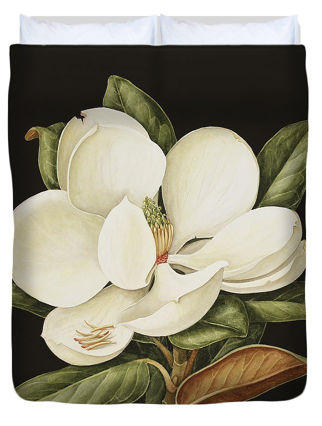 Still-life Duvet Cover featuring the painting Magnolia Grandiflora by Jenny Barron