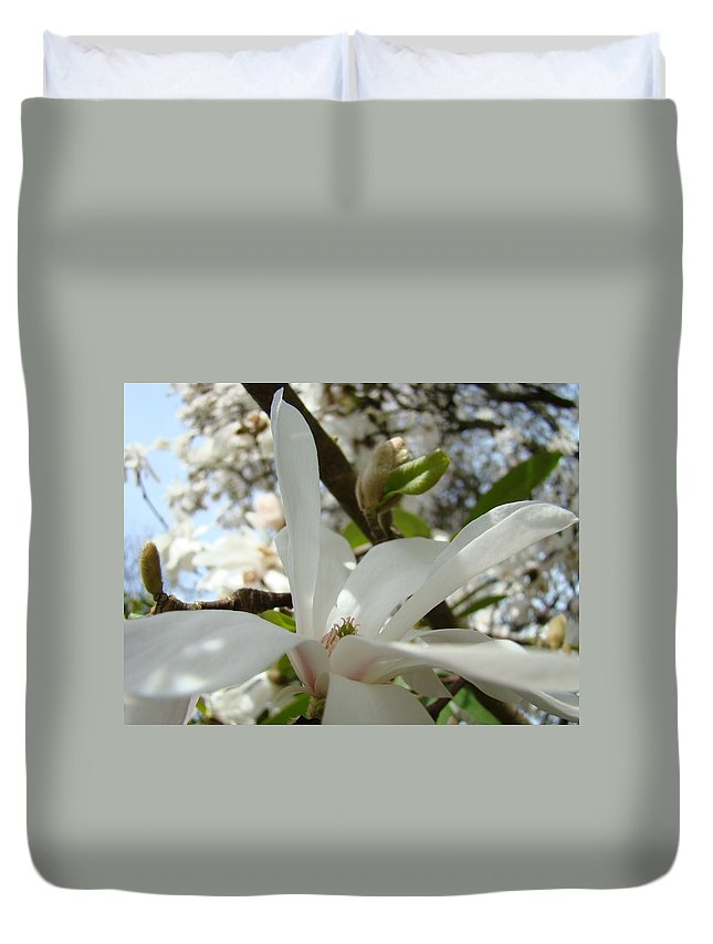 Magnolia Duvet Cover featuring the photograph Magnolia Tree Flowers Art Prints White Magnolia Flower by Baslee Troutman