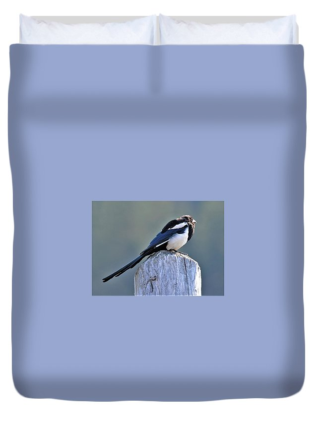 Magpie Duvet Cover featuring the photograph Magpie In The Sun by Heidi Fickinger