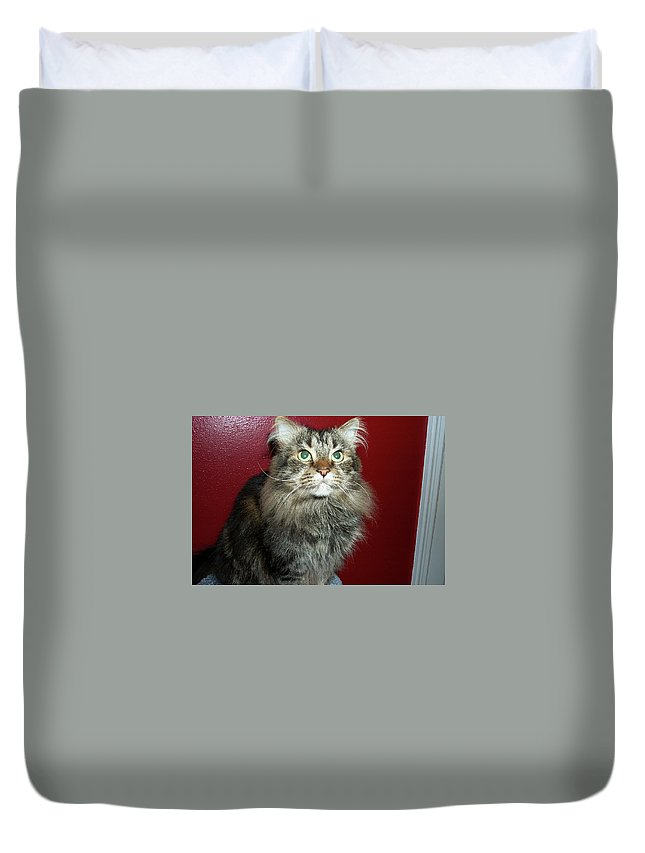 Maine Coon Duvet Cover featuring the photograph Maine Coon Portrait by Michael Munster