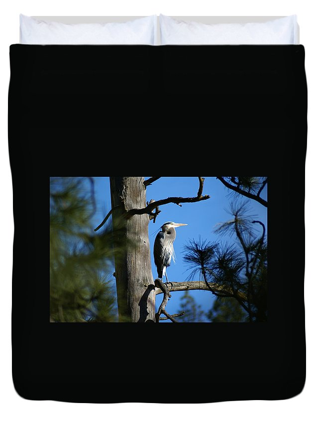 Birds Duvet Cover featuring the photograph Majestic Great Blue Heron 1 by Ben Upham III