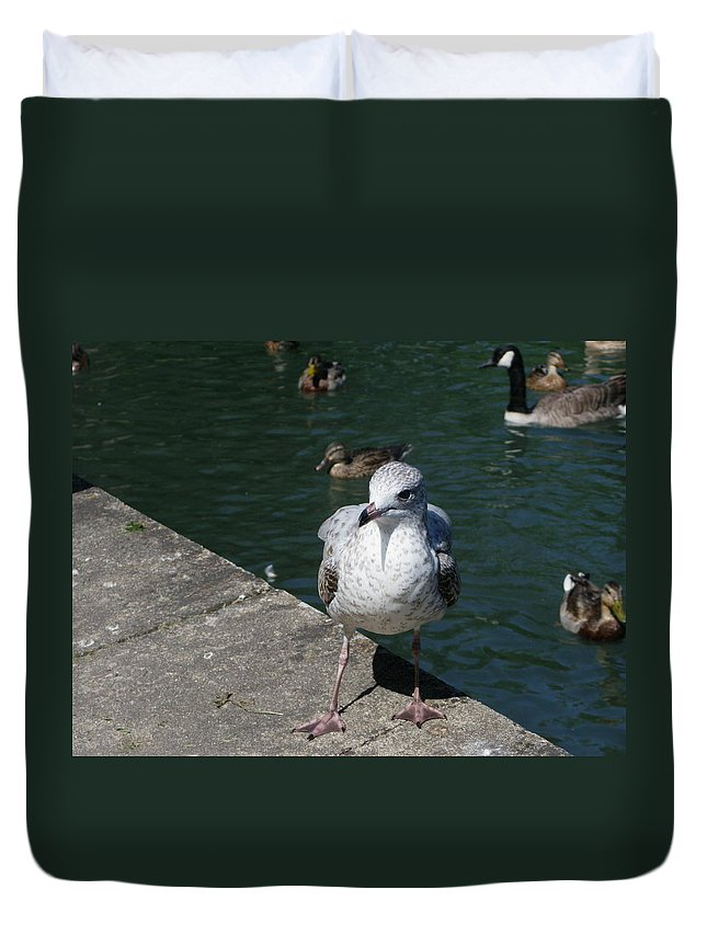 Birds Duvet Cover featuring the photograph Make Sure You Get My Best Side by Peggy King