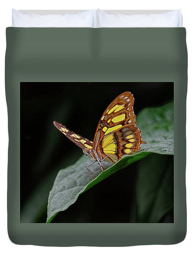 Malachite Butterfly Duvet Cover featuring the photograph Malachite Butterfly by Ronda Ryan