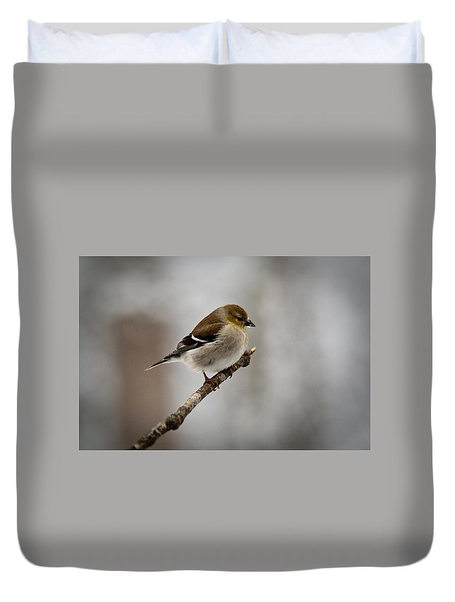 Male Duvet Cover featuring the photograph Male American Golden Finch by Douglas Barnett
