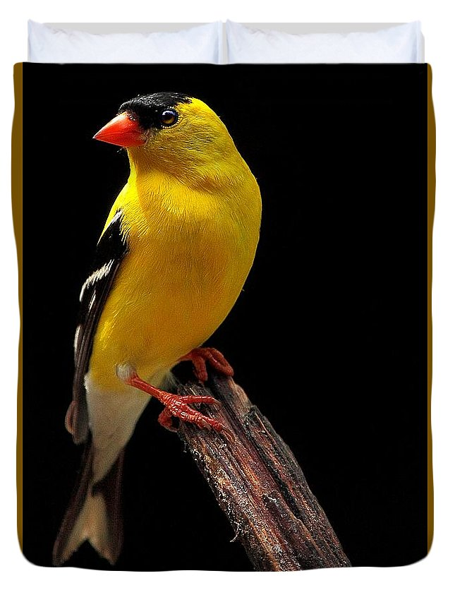 Finch Duvet Cover featuring the photograph Male American Goldfinch by Paul Mays